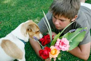 dog looking at flower bouquet