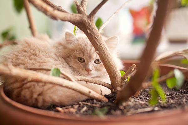 cat sleeping in plant - Photos Of Poisonous Plants And Flowers For Cats