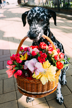 dalmation in the flowers
