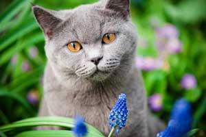gray kitten gerbera daisy