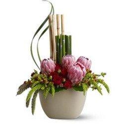 Zen Protea