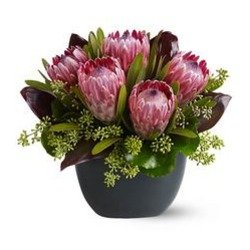 Positively Protea