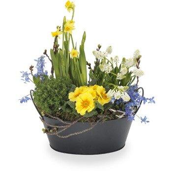 Classic Spring