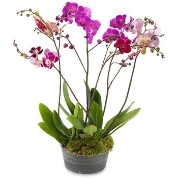 The Wonder of Orchids