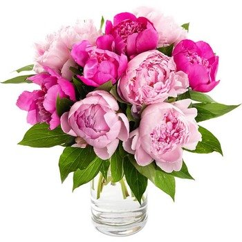 Awesome Peonies (Vase not included)