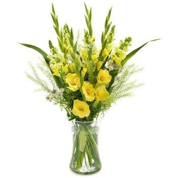 Sunny Gladiolus