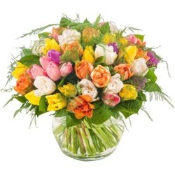An abundance of tulips