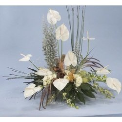 White Anthurium Arrangement