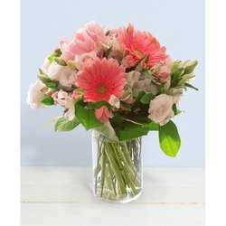 Benvenuta (Vase not Included)