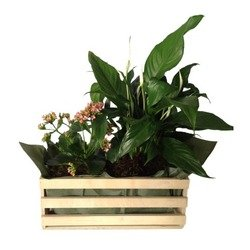 Mixed Plants In Box