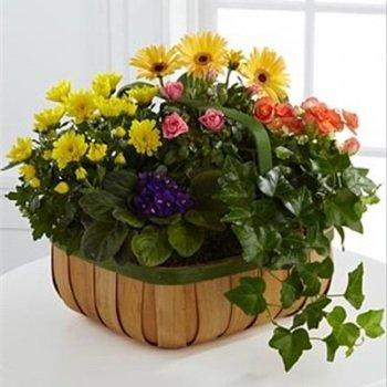Gentle Blossoms Basket