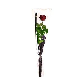 Rose in cellophane