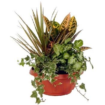 Classic Arrangement of Plants