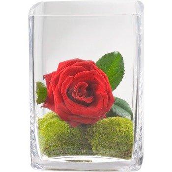 Heart's Desire (including Vase)