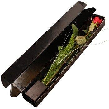 1 Red Rose