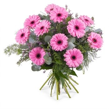 Bouquet of Gerbera Daisies (Vase Not Included)