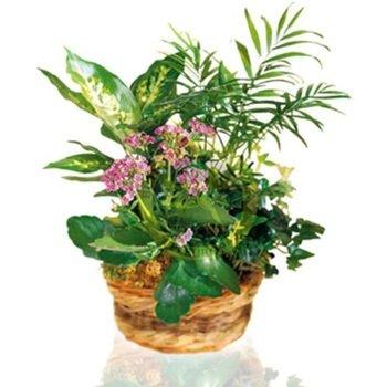 Woodland Arrangement of Plants