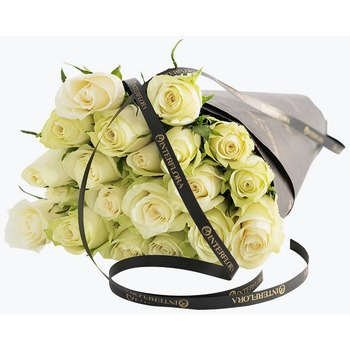 White Roses Gift Wrapped