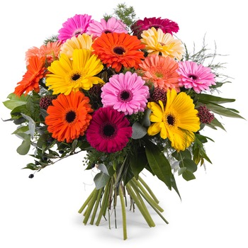 Bouquet of multicoloured Gerbera Daisies (Vase Not Included)