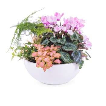 Centrepiece of Mixed Plants