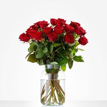 Pure Love (Vase not included)