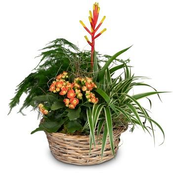 Symphony of plants