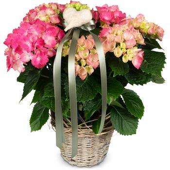 Romantic Vintage (pink hydrangea)