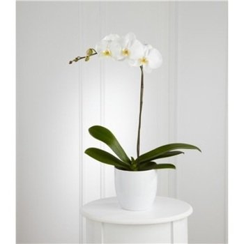 White Orchid Planter