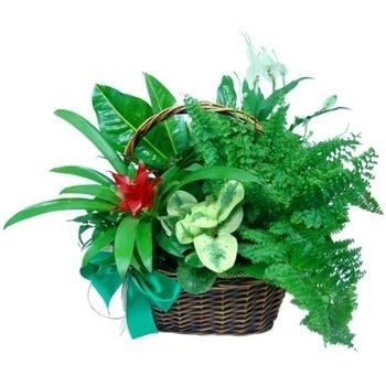 Flowerpot plants composition