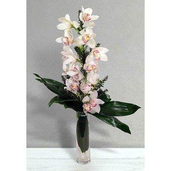 Venere (Vase not Included)